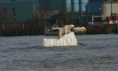 Polar Bear in Greenwich